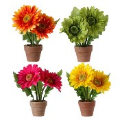 RAZ Mini Gerbera Pots