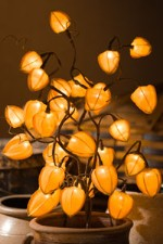 Chinese Lantern Twig Lights